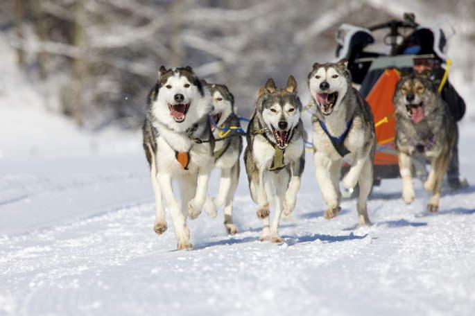lac lauzet vallée ubaye montagnes chiens traineau
