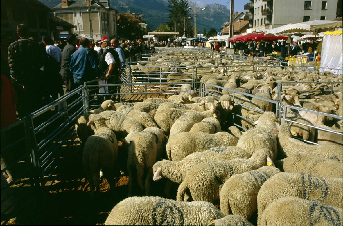 foire barcelonnette saint michel bêtes marché agricole